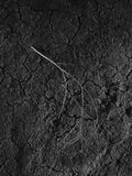 Zweig, der auf trockenen Boden legt Stockfotos