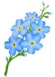 Zweig der blauen Vergissmeinnichtblumen getrennt Stockfotografie