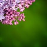 Zweig der Blumen Stockbild