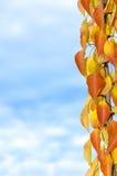 Zweig der Herbstfarben Stockfotografie