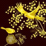 Zweig der Mimose und des gelben Vogels, Frühlings-Hintergrund Lizenzfreies Stockfoto
