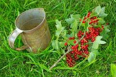 Zweig der roten Johannisbeere Stockbilder