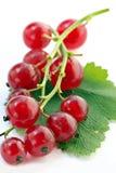 Zweig der roten Johannisbeere auf weißem Hintergrund Stockfotos
