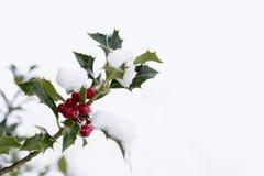 Zweig der Stechpalme mit roten Beeren Lizenzfreie Stockfotografie