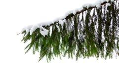 Zweig des Baums Stockfoto