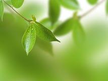 Zweig des Baums Lizenzfreies Stockfoto