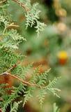 Zweig des Baums Stockbild