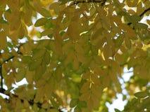 Zweig des Baums Stockfotografie
