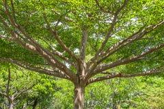 Zweig des Baums Stockbilder