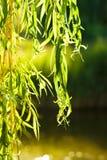 Zweig des Baums auf einem See Lizenzfreie Stockbilder