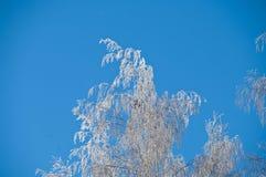 Zweig des Frosts Stockbild