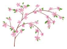 Zweig des Pfirsiches mit blühenden Blumen stock abbildung