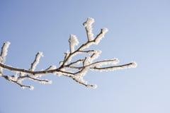 Zweig des schneebedeckten Baums Stockfotografie