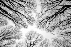 Zweig des toten Baums Stockfoto