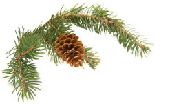 Zweig des Weihnachtsbaums Stockbilder