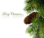Zweig des Weihnachtsbaums lizenzfreie stockbilder