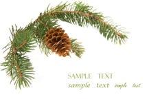 Zweig des Weihnachtsbaums Lizenzfreies Stockfoto