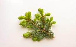 Zweig des Weihnachtsbaums auf weißem Hintergrund Lizenzfreies Stockbild