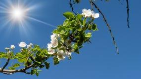 Zweig eines Baums Stockfotos
