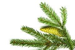 Zweig eines Weihnachtsbaums Stockbild