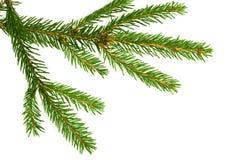 Zweig eines Weihnachtsbaums Stockfotografie