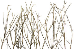 Zweig-Hintergrund Lizenzfreies Stockbild