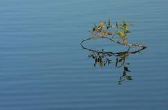 Zweig im Wasser stockbilder