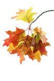 Zweig mit Blättern Stockbild