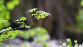 Zweig mit den grünen Blättern, die in einen Wind über einem kleinen Strom wellenartig bewegen stock video footage