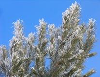 Zweig umfaßt mit Hoar-frost lizenzfreie stockfotografie