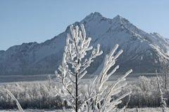 Zweig umfaßt mit Schnee lizenzfreies stockfoto