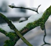Zweig umfaßt mit Schnee Stockbild