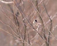 Zweig und Vogel stockfotos
