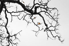 Zweig und Zweig Stockfoto