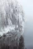 Schöner Baum des Winters über Wasser Stockfotografie