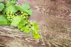 Zweig von Trauben mit Blättern auf hölzernem Hintergrund Lizenzfreies Stockbild