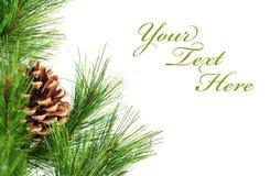 Zweig von Weihnachten Lizenzfreie Stockbilder