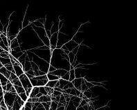 Zweige über Schwarzem lizenzfreie stockfotos