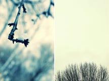 Zweige stockfotografie