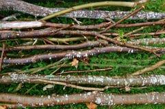 Zweige Stockbilder
