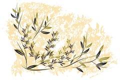 Zweige   stock abbildung