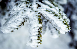Zweige bedeckt mit Eis und Schnee Stockfotos