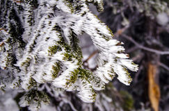 Zweige bedeckt mit Eis und Schnee Lizenzfreies Stockfoto