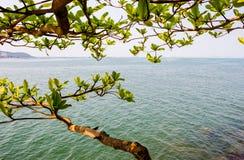 Zweige, Blätter, Meer Lizenzfreies Stockbild