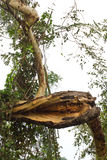 Zweige der Bäume aufgegliedert. Stockbild