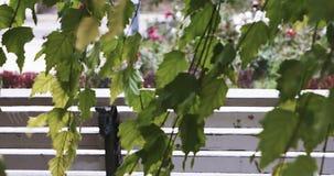 Zweige der Birke mit den grünen Blättern, die vor Stadtpark mit Blumenbeet, gehenden Leuten und Parkbanksatz sich bewegen stock video