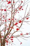 Zweige der Eberesche Stockbilder