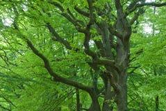 Zweige der Eichen Stockfotos