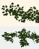 Zweige der Laubbäume Lizenzfreie Stockbilder