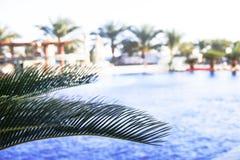 Zweige der Palmen gegen den Himmel Stockbild